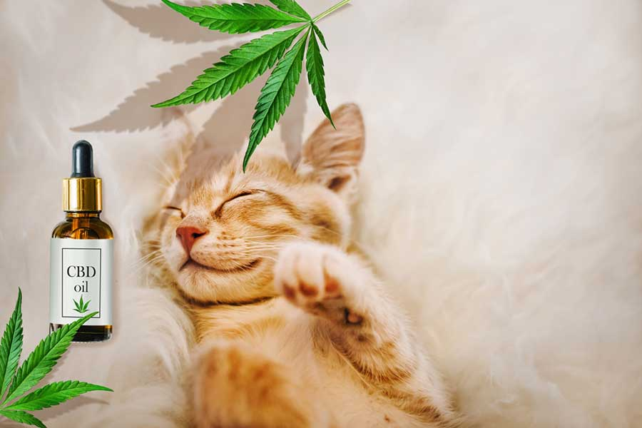 What Is Melatonin in CBD Oil - Colorado Blossom